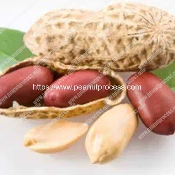 Using peanuts to cure peanut allergy