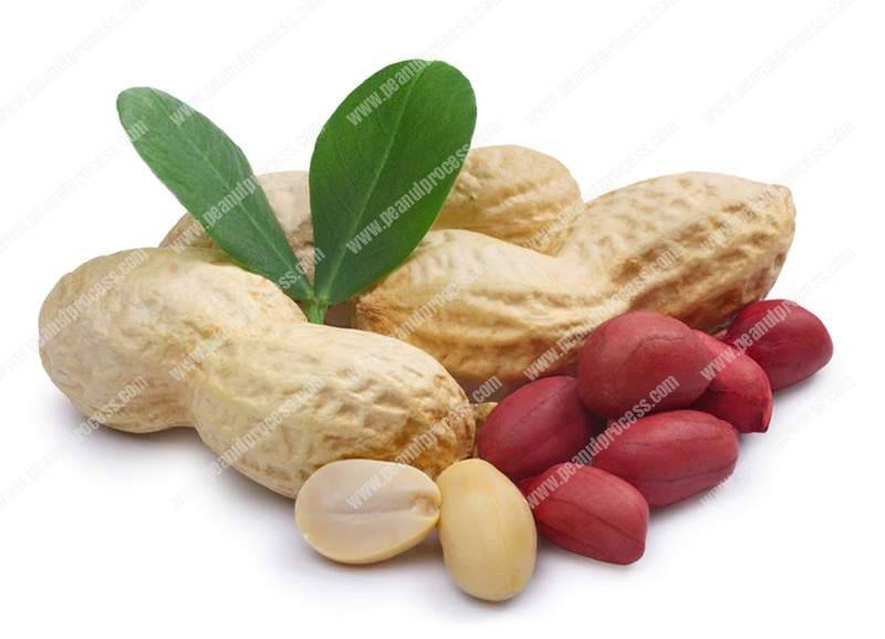 Difference-of-Blanched-Peanuts-and-Unblanched-Peanuts