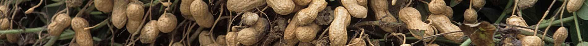 Peanut Planter and Harvester